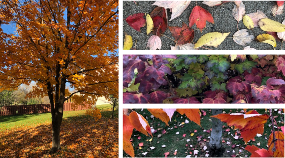 Fall Leaves Collage.png